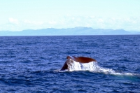 Videonauts Neuseeland Südinsel Kaikoura whale watching backpacking