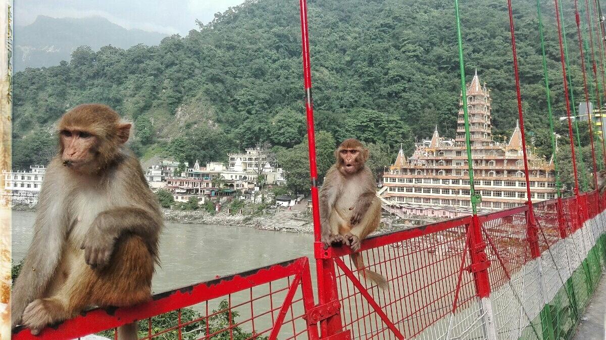 Videonauts backpacking Indien Rishikesh