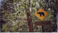 Videonauts Sri Lanka Elephant sign
