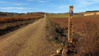 November_Camino15