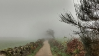 November_Camino37
