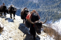Videonauts Nepal Everest Base Camp Trekking Jak backpacking