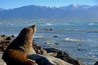 Videonauts Neuseeland Südinsel Robben Kaikoura backpacking