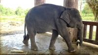 Videonauts Sabbatical Laos Luang Prabang Elephant Village IV