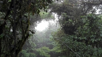 Videonauts Costa Rica Monteverde conopy backpacking